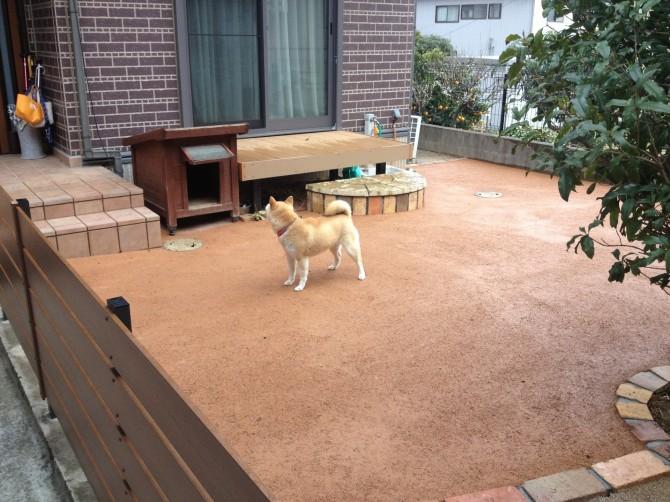 愛犬家の庭づくり