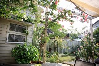 バラ、美しいお庭