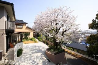 桜とココマ