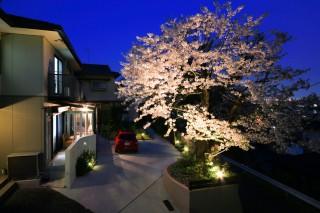 夜桜とココマ