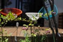 ストリーのある庭