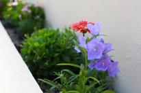 おしゃれな花壇